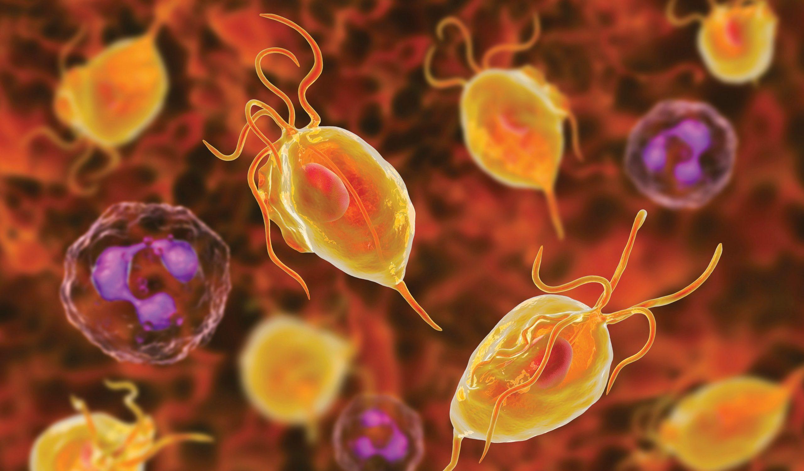 Que savoir de la trichomonase, ses symtômes et traitements